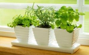 grow-herb-garden-kitchen-ftr-1