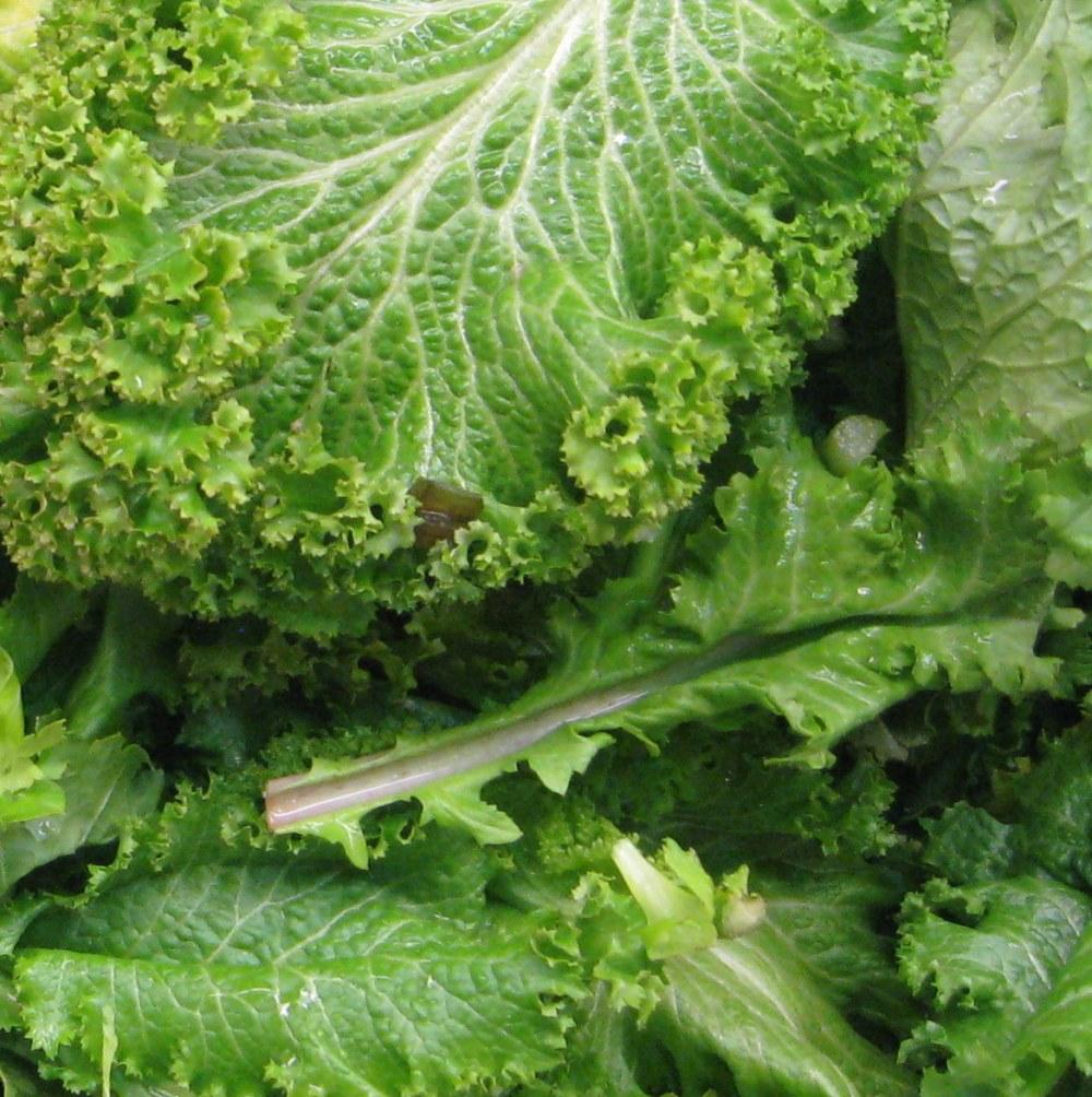 close-up-mustard-greens-crop-img_6023